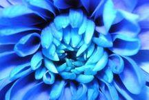 planet blue / by Shadae Lawson