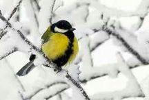 Yellow Winter Wonderland