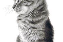 Black and white draws