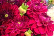 Fleurs de saison : Aout / Les fleurs du mois d'août à Paris / August flowers in Paris www.boutique-pompon.fr
