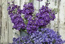 Flowers & Garden / by Pam De La Garza