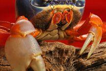 Theme: Crustaceans