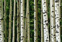 Woodland Themes
