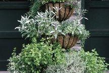 Vertical Garden Spaces