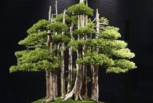 Juniper Bonsai Tree Seeds / Tag friends who would love to grow Juniper Bonsai Tree. First 250 buyers will get a special discount and free shipping! Get your seeds here - https://goo.gl/eRPAHM
