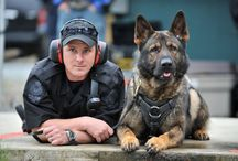 Police Dogs / The Vancouver Police Dog Squad is the oldest municipal police dog unit in Canada and the second largest behind the Toronto Police Service. The handlers and their dogs work round the clock and are trained in criminal apprehension, as well as narcotics, firearms and explosives detection.