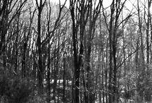 Zwart-Wit foto's / .