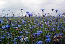 Évszakok: tavasz / Fotók, ahogyan én látom