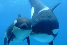 Save the whales, the oceans +