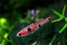 fishieees