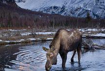 Alaska / Mongolië / Iceland