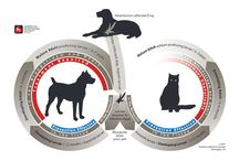 Heartworm Disease / Heartworm disease is a serious and potentially fatal disease caused by foot-long worms (heartworms) that live in the heart, lungs and associated blood vessels of affected pets, causing severe lung disease, heart failure and damage to other organs in the body.