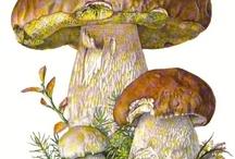 овощи и фрукты, грибы