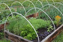 Garden / Hyötypuutarha