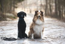 Doggy ideas/inspiration / Inspiration for dogs in everyday life.