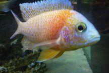 Fishy Insta