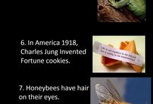 Fun Facts / by Heather DeBoer