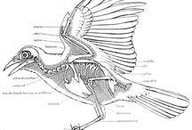 AS Art Exam- Birds