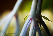 Fine Art Photography / Photography