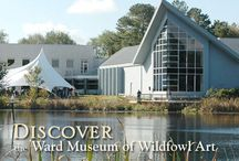 Ward Museum / The Ward Museum of Wildfowl Art is nestled next to Schumaker Pond in Salisbury, Maryland. Surrounded by wildlife in the heart of the Atlantic Flyway, the Museum features the world's largest and finest public collection of decorative and antique decoys.