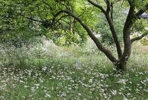 Chorleywood images