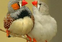 vogels / vogels in het algemeen