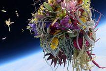 Flowers sculptures- Makoto
