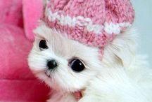 Cutiee