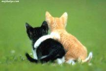 Meow...miau / cats / by ana S. rio