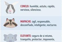 Cosas de animales.