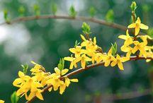 Vegetation / Plants and Flowers
