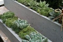 window boxes succulents