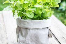 zioła / piękne zdjęcia potpotów z ziołami