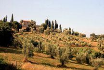 Toscane / paysage de l'Italie