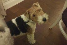 Daisy dog|Дэзи собака