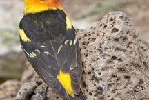 Birds - Πουλιά