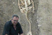 Halember csontváza
