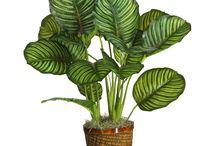 Lätt skötta växter