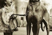 Dogs / by Stacey Robbins