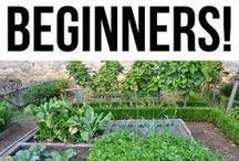 beginner tips for gardening