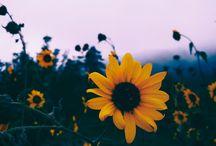 Virágok természet