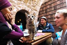 Cat cafes take over world / The world of the weird cafe has moved on from cats. Cat cafe pops up in New York Aqua-fitness for dogs Meet a taxi driver for pets  And yet, while some of these obscure cafes grab headlines for a few days and then vanish, cat cafes have proliferated around the world, to become if not the most novel, certainly the most enduring craze when it comes to themed coffee houses. | www.petnook.in