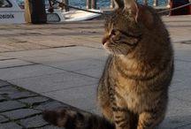 İstanbulun kedileri