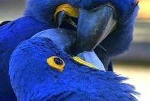 Birds / birdies