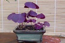 plantsfreak