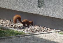 Wiewiórki / Squirrels
