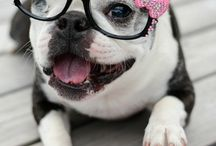 And for the dog.... / Just for fun...because we know you all have tried this before! What could be cuter than a pup with glasses?