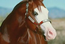 Horses / by Jon Talbot