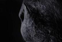 animal_foto