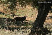Fotografía de Fauna Salvaje en Sierra Morena / Descubre los rincones de Sierra Morena dónde habitan especies tan emblemáticas como el Lince ibérico, la jineta o la nutria, de la mano de guías especializados.